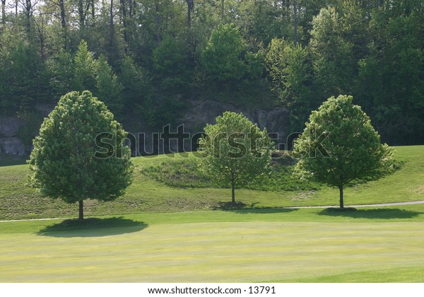 three conical trees on green