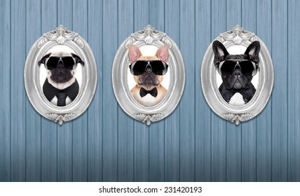 three cool dogs in  frames hanging on a wooden blue wall
