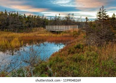 Three Corner Pond walking trail, Torbay Autumn colors on a walking trail.