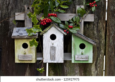 Three cute birdhouses with winter berries, ivy and old rustic wooden fence