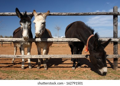 three cute donkeys