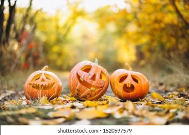 Three cute halloween pumpkins in autumn park