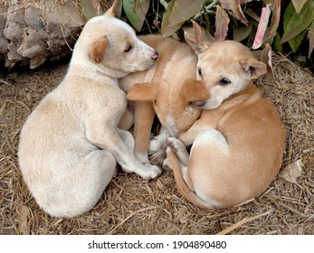 Three cute helpless street puppies are shivering in the cold and lying close to each other for generating the heat