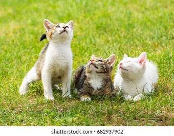 Three cute kittens on the grass, all looking up