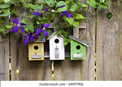 Three cute little birdhouses on rustic wooden fence with purple Clematis plant growing on them
