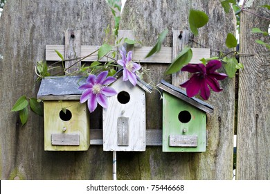 Three cute little birdhouses on rustic wooden fence with pink and purple Clematis plants growing on them
