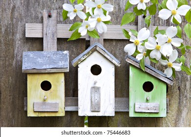 Three cute little birdhouses on rustic wooden fence with beautiful white Dogwood blooms on them