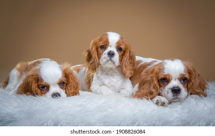 three cute pet dogs looking image