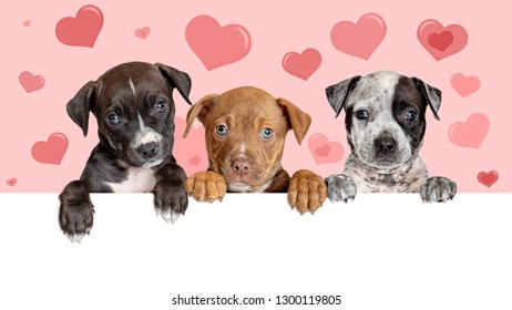 Three cute puppies hanging over blank web banner with Valentine's Day hearts in background.
