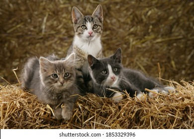 Three cute small cats in a barn on straw bales