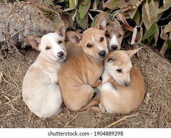 Three cute street puppies staring at the camera in the amazing eyes and shivering in the cold