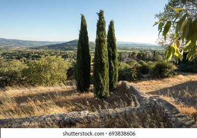 Three cypresses in  in Saint-Saturnin-les-Apt Muehle in Provence, France