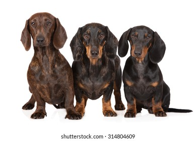three dachshund dogs together on white