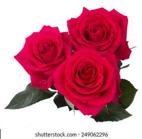 three dark pink roses isolated on white background