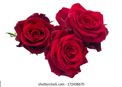three dark red roses isolated on white background