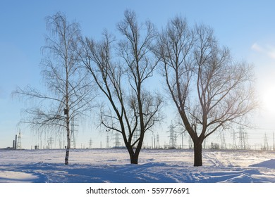 three deciduous tree on snowy field day