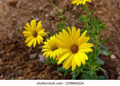 Three decorative yellow flowers