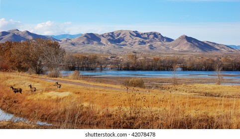 Three deer at Bosque del Apache national wildlife refuge, New Mexico