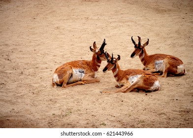 three deer sitting on the ground in a zoo
