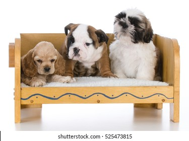 Royalty Free Puppies Of Different Breeds Stock Images Photos