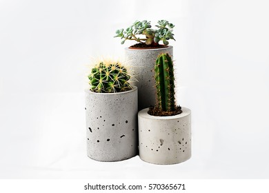 Three different cactus in round pots of concrete on a white background