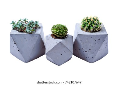Three different cactuses in different pots of concrete on a white background
