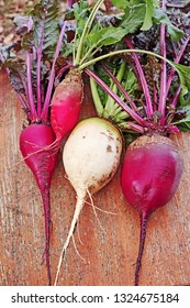 Three different plants beets view from the top
