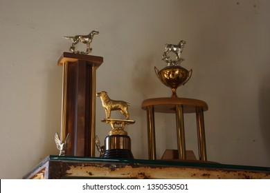 Three dog trophy awards