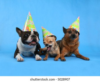 three dogs with birthday hats on