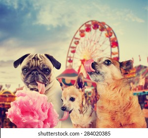 three dogs at a carnival of fair eating pink cotton candy toned with a retro vintage instagram filter effect app or action