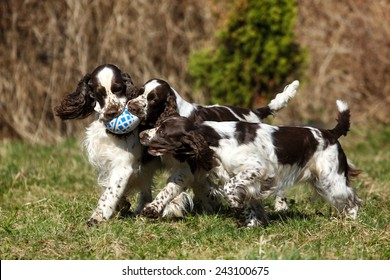 Three dogs playing with a ball