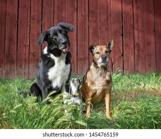 Three dogs posing for a cute photo in front of a barn