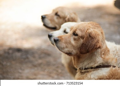 three dogs profile