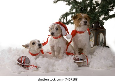 Three dogs sitting by the christmas tree