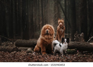 Three dogs sitting in the foliage in the autumn forest