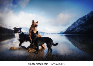 Three dogs are standing in the lake between the mountains covered with snow.