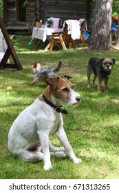 Three dogs in the yard in the summer cottage
