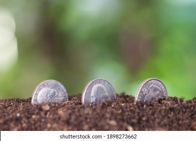 Three dollar coins planted in the soil in front of a blurred green background