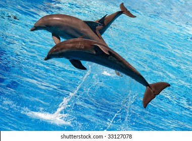 three dolphins jumping from the water