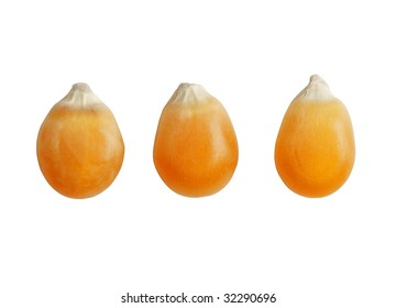 Three dried corn kernel isolated over white background