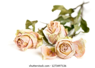 Three dried roses lying on a white surface