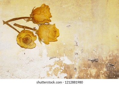 Three dry yellow roses on old peeling wall background. Copy space for text or image.