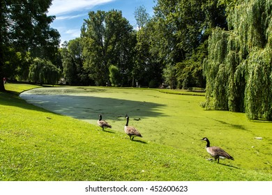 Three ducks in Laeken park