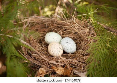 three eggs in a bird nest spring