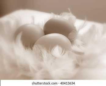 three eggs with feathers in sepia