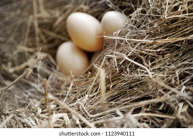 Three eggs on straw in a hen house