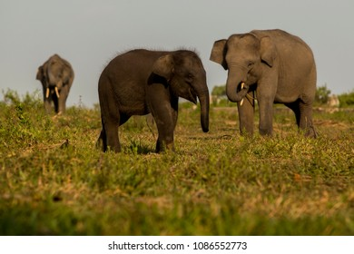 three elephants in the meadow