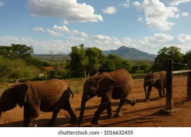 Three elephants in a row