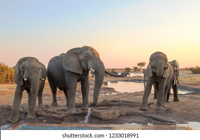 Three Elephants taking a drink from the camp waterhole at dusk, with a orange tinged sky