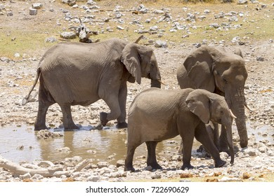 Three elephants at a watering hole in the Etosha Wildlife Reserve in Namibia.